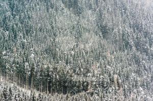 Winter trees - franky242 photography