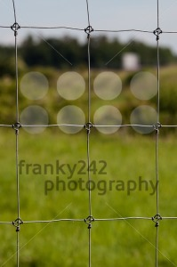 Wire fence with green grass - franky242 photography