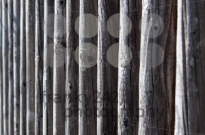 Wooden Fence Texture - franky242 photography