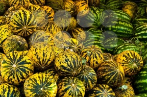 Yellow-Water-Melons