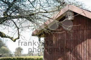 allotment hut with garden in spring - franky242 photography