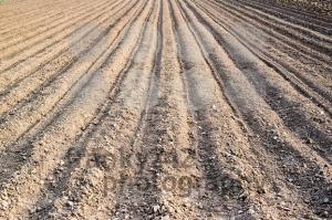 freshly planted potatoes - franky242 photography