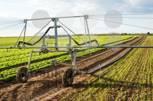 irrigation on lettuce fields - franky242 photography