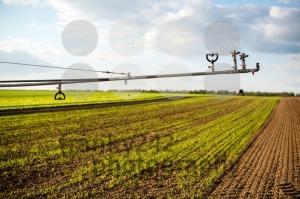 irrigation on lettuce fields - franky242 photography