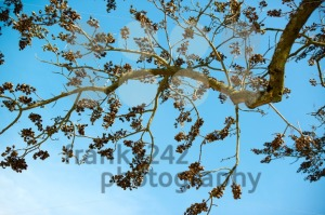 old-dry-branches