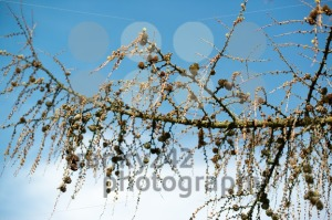 old-dry-branches1