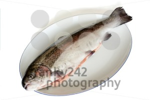 rainbow trout - franky242 photography