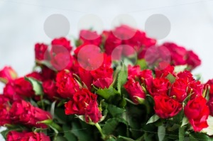 red roses - franky242 photography