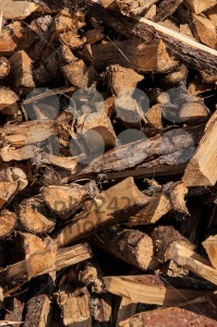 split wood pile in forest - franky242 photography