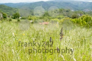 wild-meadows-in-Liguria-Italy