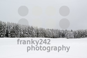 Forest during snowfall in winter - franky242 photography