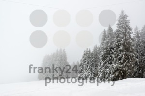 Trees during snowfall in winter - franky242 photography