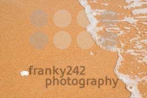 Sea shells in sand - franky242 photography