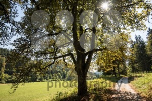 Beautiful landscape with chestnuts in Swabian Alb - franky242 photography