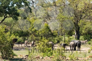 African elephants and zebras at a waterhole - franky242 photography