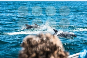 Dolphin family playing in the water - franky242 photography