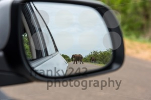 Reflection Of Elephant In Rear View Mirror - franky242 photography