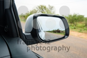 Side rear mirror of car showing elephant herd passing the street - franky242 photography
