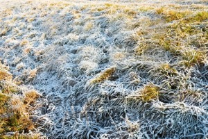 frozen grass in winter - franky242 photography