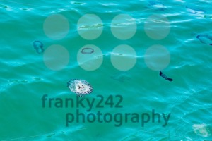 Jellyfish in the ocean of South Africa - franky242 photography