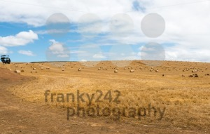 Straw bales on a harvested wheat field - franky242 photography