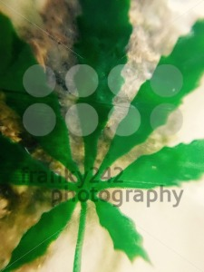 Bag of weed with marijuana leaf - franky242 photography