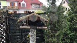 Blackbird in birdhouse - franky242 photography