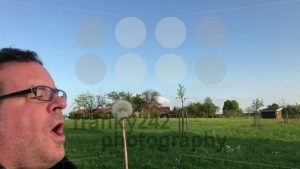 Man picking up and blowing a dandelion flower - franky242 photography