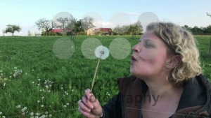 Woman picking up and blowing a dandelion flower - franky242 photography
