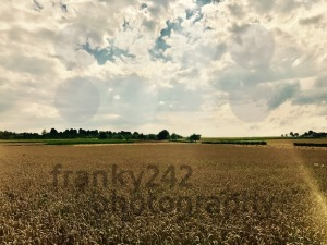 dramatic sky over corn field - franky242 photography