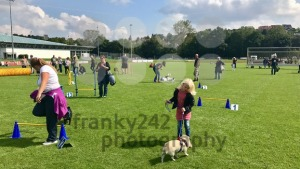 Dog trainers with pug dogs - franky242 photography