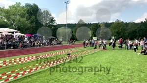 Pug dog running during dog race - franky242 photography