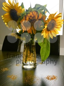 Wilted sunflowers in glass vase - franky242 photography