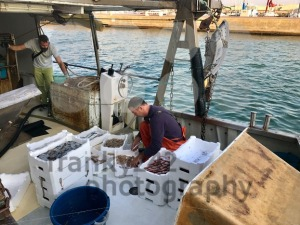 A fisherman is sorting his catch on an anchored fishing-boat - franky242 photography