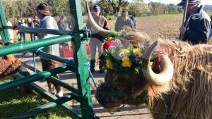 Ceremonial descent of cattle from the mountain pastures in the Swabian Alb - franky242 photography