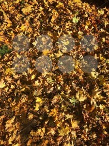 Dry fallen autumn leaves - franky242 photography