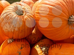 Heap of Autumn Carving Pumpkins for Sale - franky242 photography