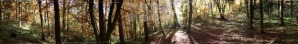 beautiful autumn forest panorama - franky242 photography