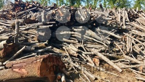timber stacked up rather rough after felling - franky242 photography