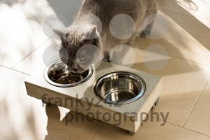Beautiful cat eating out of a food bowl - franky242 photography