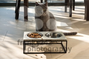 Beautiful cat sitting in front of a food bowl - franky242 photography