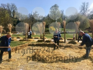 Elderly men are demonstrating how grain was threshed manually on a farm in ancient times - franky242 photography