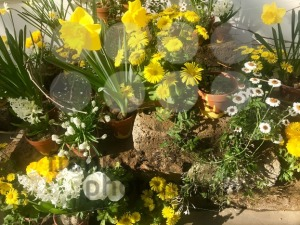 spring garden flower arrangement in pots - franky242 photography