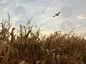 Airplane departing over dry cornfield - franky242 photography
