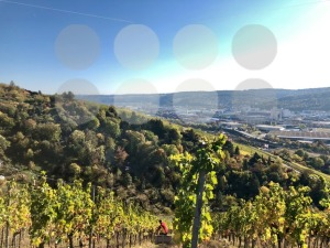 vineyards in the Stuttgart area - franky242 photography