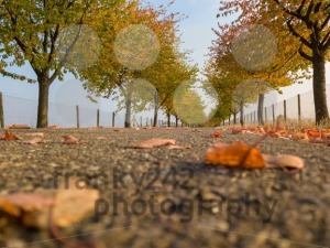 Alley in autumn park with colorful foliage - franky242 photography