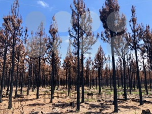 Burnt bush land after a bushfire near Knysna - franky242 photography