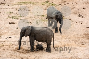 Elephants family with cute baby - franky242 photography