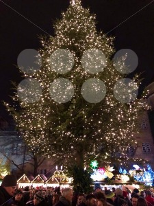 People are enjoying the Christmas market with a large Christmas tree - franky242 photography