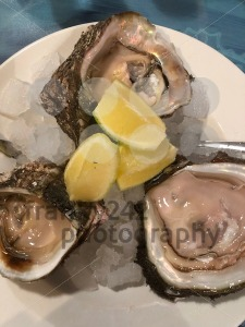 Opened oysters on a plate - franky242 photography